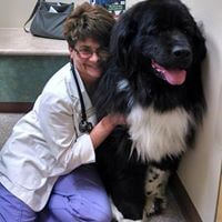 A giant fluffy black and white dog smiling next to the vet