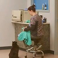 A vet tech sitting in a chair while a black cat looks up at her