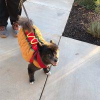 Zorro Hotdog